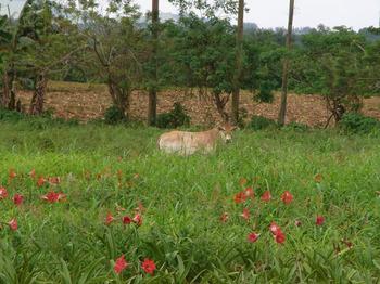 カガヤン農場.jpg